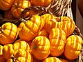 Manhattan Gourds